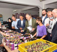 Bursa'da incir hasadı başladı